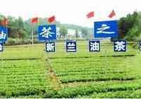 中國油茶之鄉(攸縣油茶)