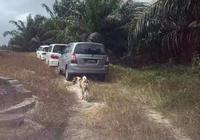 狗狗狂追靈車9公里,只為見主人最後一面,到墓地後舉動讓人心碎