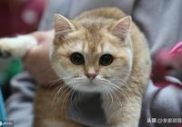 如果貓咪有這5種表現,那麼很遺憾地告訴你,貓開始討厭你了
