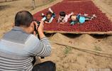 安陽:家鄉的大棗晒紅一地 吸引了很多遊客前來遊玩