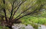 一條無任何汙染的河流,成就了一塊長6100餘米,面積4988畝的溼地,熱辣辣夏天裡給眾多遊人一片清涼