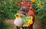 偷偷笑了幾天,這些搞笑圖片能讓你心情愉悅,每天都是笑容滿面