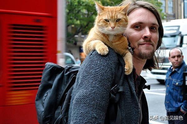 從吸毒到吸貓,一隻貓改變一個流浪漢的一生