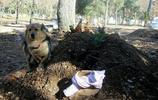 主人離世後,狗狗每天來到墓前陪伴,堪稱現代版的忠犬八公
