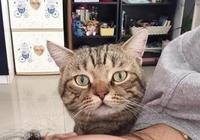 主人誘哄小貓咪,小貓咪為了小魚乾一副豁出去了的表情,萌哭了!