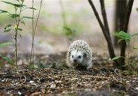 童年記憶中的許多野生動物逐漸消失不見,其實它們也是城市的居民啊
