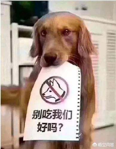 如何看侍我對狗有感情不吃狗肉,但不反對別人吃狗肉這句話?