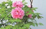 中國十大名花,一花一詩,驚豔千年