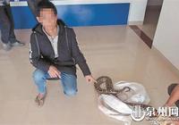 永春路遇大蟒蛇抓去賣 兩男子一起被判刑