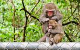 上個世紀國家為換取外匯,無節制出口,導致瀕臨滅絕的動物