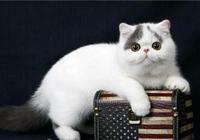 如果得罪了貓咪,貓咪會有怎樣的表現?