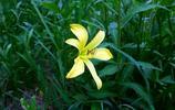 這是大興安嶺常見的幾種野花,你能叫出它們的名字嗎?