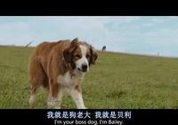 《一條狗的使命》:寵物對於人類來說,不僅僅是陪伴
