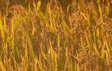 吉林神農莊園旅行記