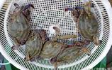 市民吃膩了梭子蟹 普通蟹子25塊錢一斤 只有小朋友看著好奇