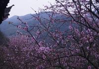 陽春三月的山