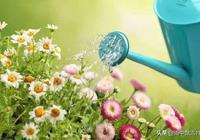 養花不會澆水?教你掌握這6個澆水方法,花卉生長旺盛開花多