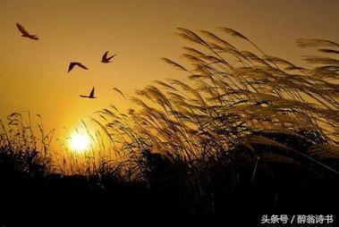 《七絕 · 秋江晚景》文/百玩山人