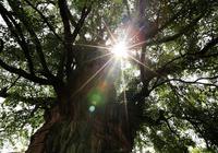 菩提樹下等千年,只是為見你一面!