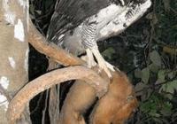 男子山中攝影發現奇特大鳥,細看爪子後扔掉相機拔腿就跑