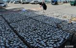 秋風起海貨多!來逛一逛青島的晒魚之鄉