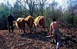 老照片:80年代的農村生活 80後你們還有印象嗎?