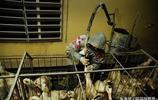 頂級美食法式鵝肝的背後,鵝肝的生產方式到底有多殘忍?