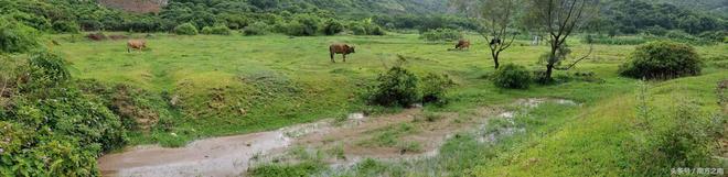 「原創攝影」雨後的田野