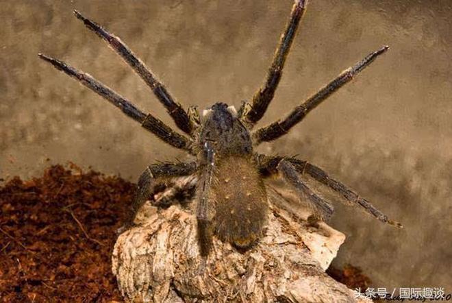 世界上最毒的8種生物排名,看見了要趕緊跑