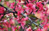 鳥兒與花(29)