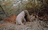 印度荒漠十年重歸森林,這群志願者用行動呼籲大家保護環境