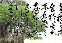 一棵樹的命運
