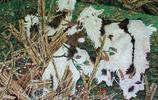 羊,羊,羊,如意又吉祥!——國畫百羊圖!