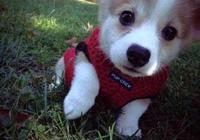 如何一招呼狗狗就自己跑回來?學會這幾招,關鍵時候能救它一命