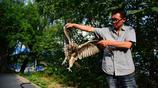 """河南農民蒜地拾到一凶猛""""怪鳥"""" 專家說不能賣 最後他這樣處理"""