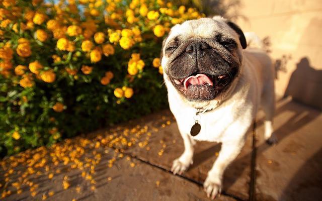 狗狗竟然也會來月經!那它們也會絕經嗎?