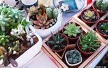 最適合陽臺上種的幾種花草,好養漂亮易活,你種了嗎?