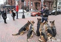二十隻狼狗能打過一隻老虎嗎?