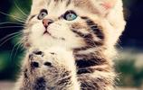 鏟屎官,把我的飯拿來!不要隨便地餵你的貓咪,貓糧要因貓而異