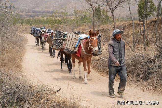 實拍四川農民結伴打工,人與騾馬同住一處,看看生活成啥樣