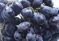 釀酒技術:黑加侖(黑穗醋栗)酒的做法