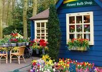 15種家庭常見綠植養護大全!送給愛養花的朋友!