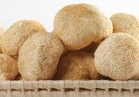 猴頭菇你瞭解嗎?