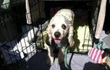 20歲的老狗被家人無情棄養,結局讓人驚喜讓人感動