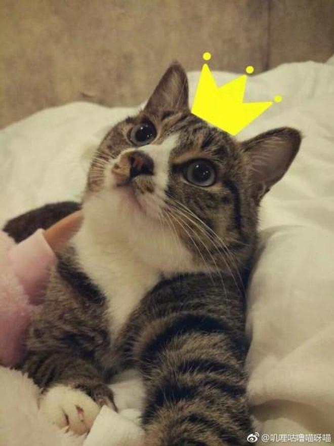 """喵星人圖集:什麼時候覺得你家貓像個人?""""對我微笑的時候!"""""""