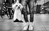 帶著漫遊世界的心情,愜意地欣賞這11張陪伴主人旅行的狗狗照片吧