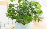 幾乎無人知道,家裡放這些植物盆栽,身體越來越健康,還鎮宅辟邪