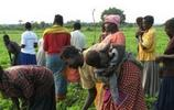 烏干達女人