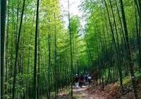 這條位於從化的徒步線,竹海搖曳,果樹遍地,還有美食等你體驗