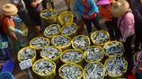海南瓊海:漁港迎豐收 水產交易忙